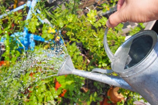 家庭菜園,水やり,頻度