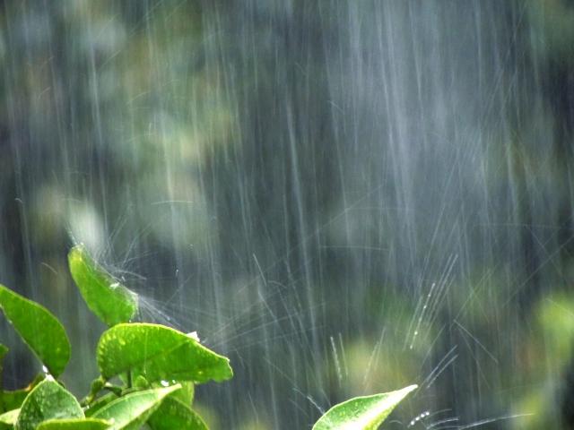 雨,洗濯,やり直し