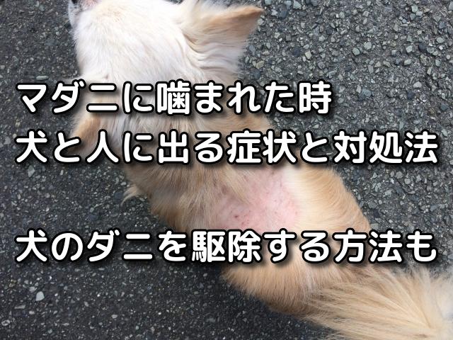 犬,ダニ,人間へ 影響