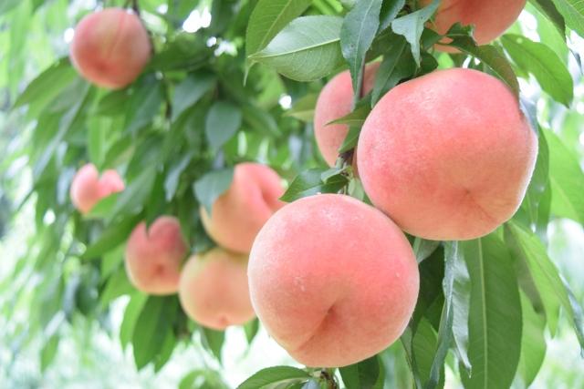 桃が苦い理由